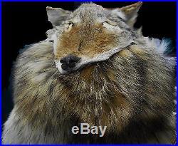 Native American Navajo Indian Headdress Full Coyote Medicine Mountain Man Shaman